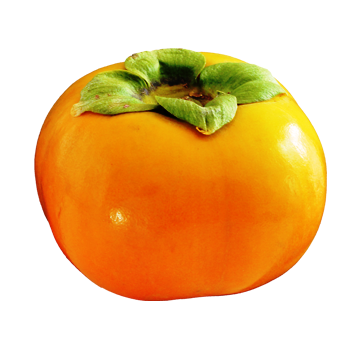 persimmon_PNG9191