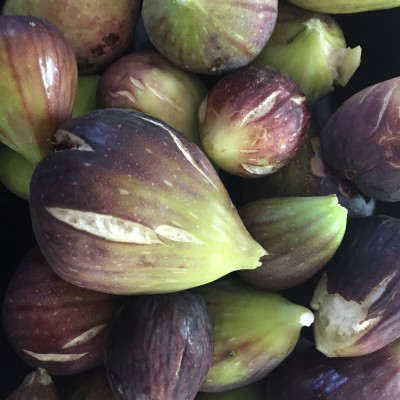 Beautifully ripe figs, with those splits in the skin showing they are perfectly ready to eat.