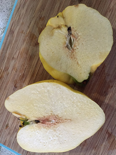 A quince, free of worms.
