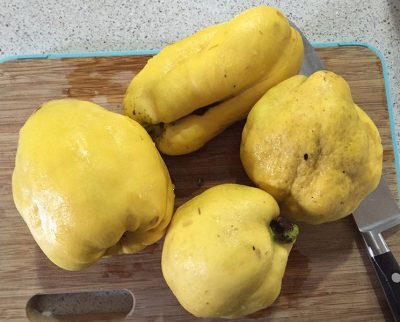 Quinces come in all shapes.